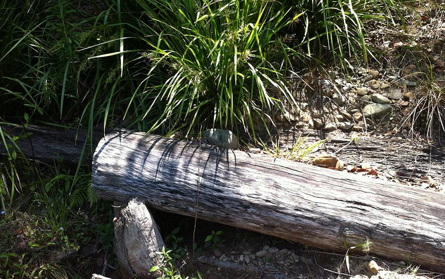 log-walls